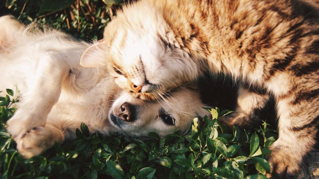 Ya partió el Registro Nacional de Mascotas. Demuestra tu amor. Registra!